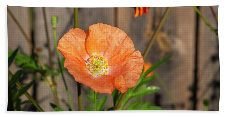 Shirley Poppy Beach Towel featuring the photograph Shirley Poppy 2018-12 by Thomas Young