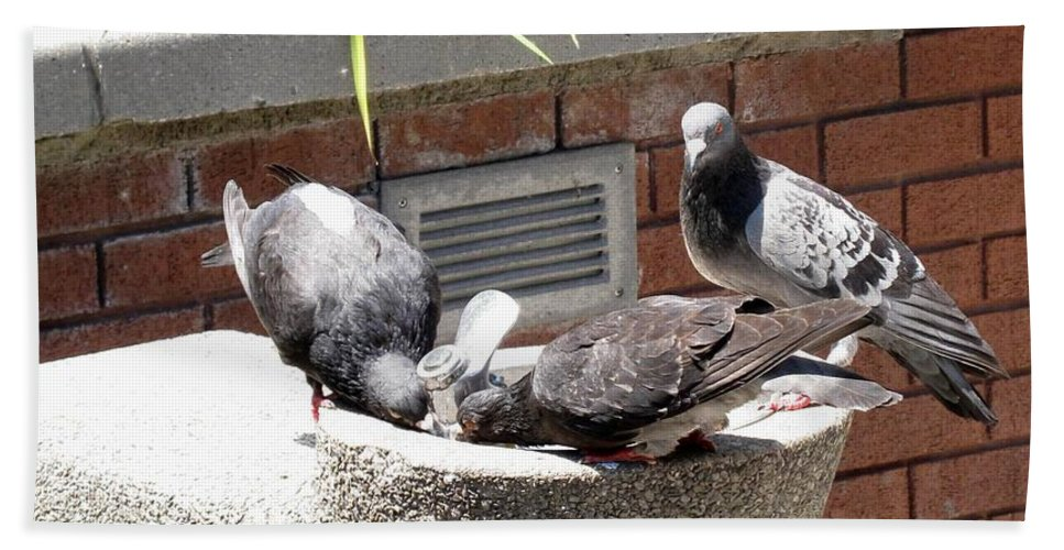 Pigeons Beach Towel featuring the photograph Shooo by Ian MacDonald