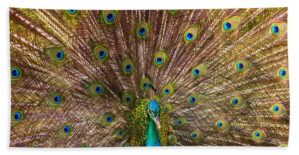 Peacock Beach Towel featuring the photograph Showing Your Colors by Mike Dawson