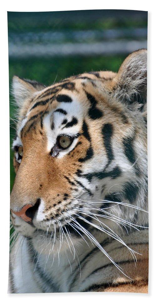 Animal Beach Towel featuring the photograph Siberian Tiger by Glenn Gordon