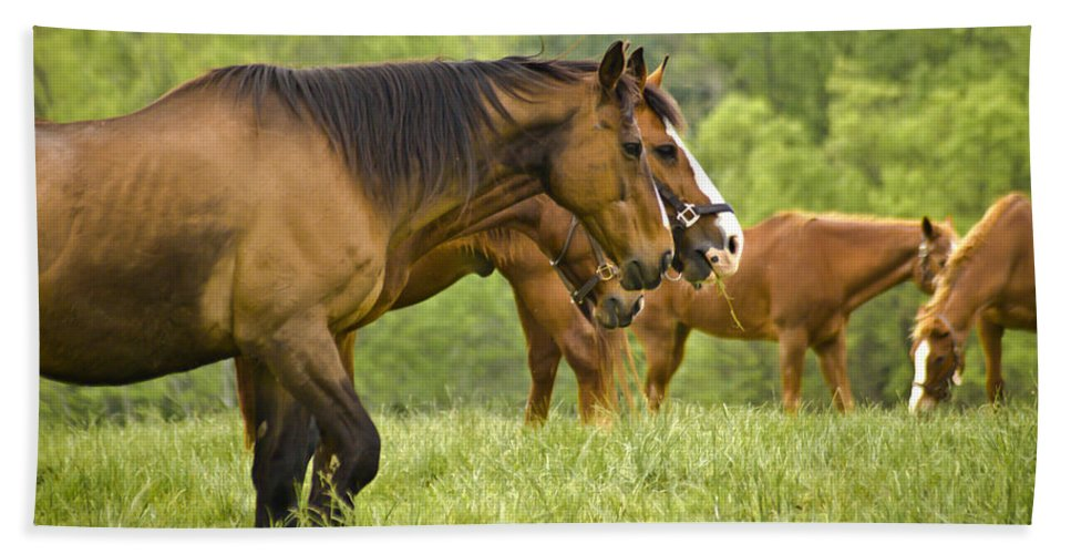 Horse Beach Towel featuring the photograph Side By Side by Trish Tritz