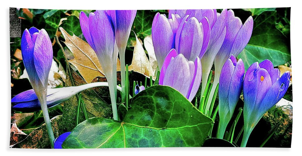 Crocus Beach Towel featuring the photograph Signs Of Spring I by Kevyn Bashore