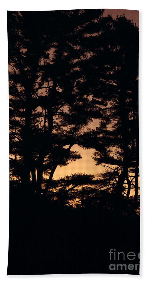 Tree Beach Towel featuring the photograph Silhouette Of Forest by Erin Paul Donovan