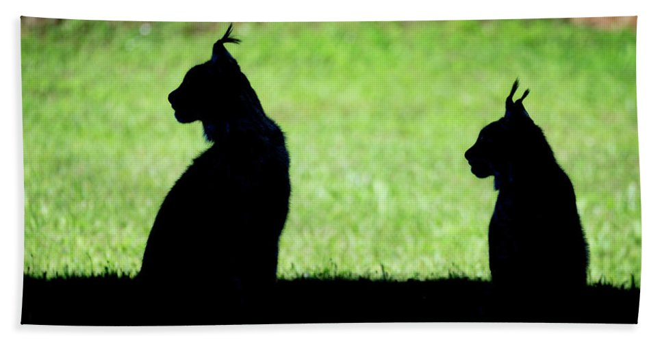 silhouette of two lynx sitting in profile beach towel for sale by ndp