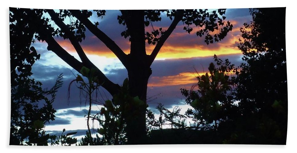 Trees Beach Towel featuring the photograph Silohuettes Of Trees by Lois  Rivera