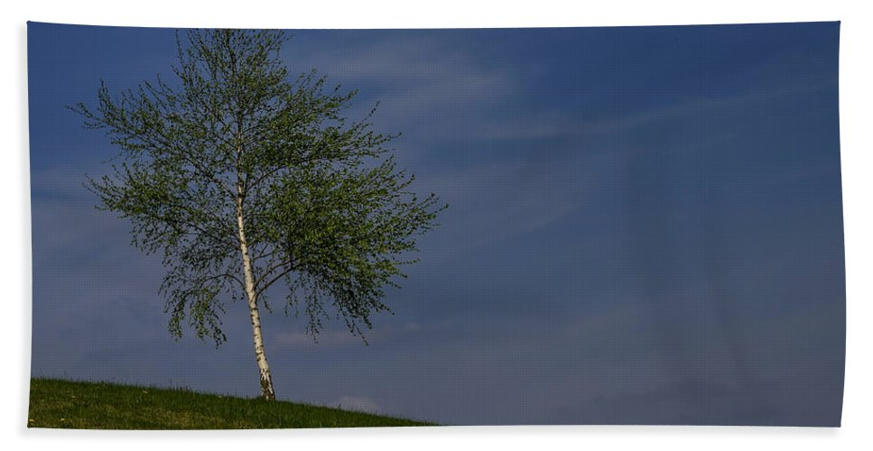 Betula Beach Towel featuring the photograph Silver Birch Tree by TouTouke A Y