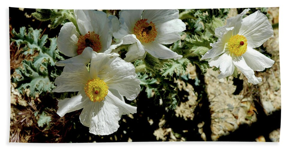Usa Beach Towel featuring the photograph Silver Terrace Virginia City Nevada Flowers by LeeAnn McLaneGoetz McLaneGoetzStudioLLCcom