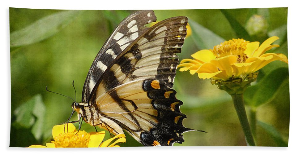 Butterfly Beach Towel featuring the photograph Simple Things by Fran J Scott
