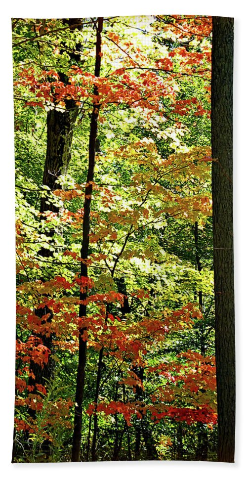 Autumn Beach Towel featuring the digital art Simply Autumn by Joan Minchak