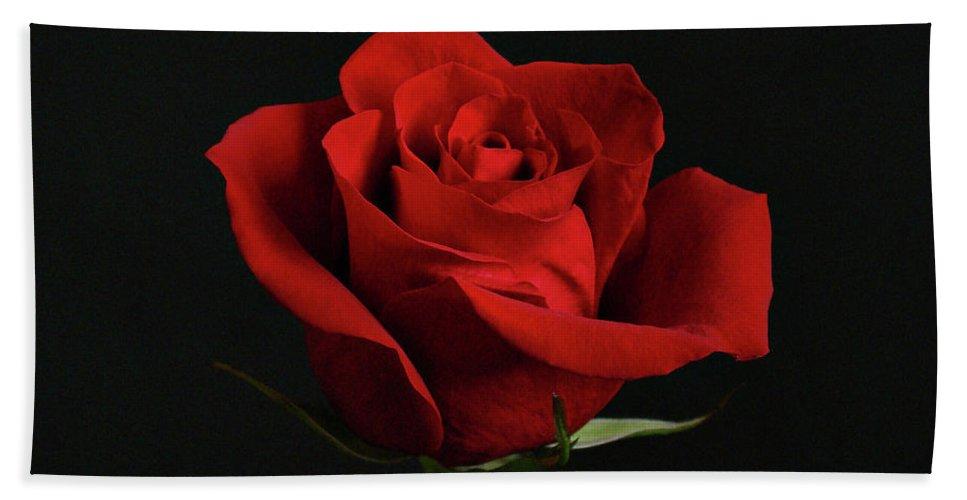 Flower Beach Towel featuring the photograph Simply Red Rose by Sandy Keeton
