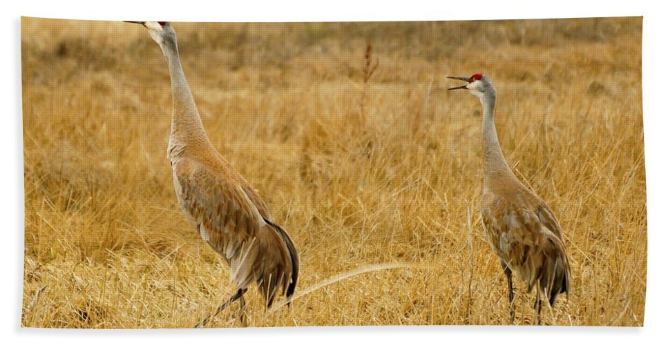Sandhill Crane Beach Towel featuring the photograph Sing Out Loud by Greg Norrell