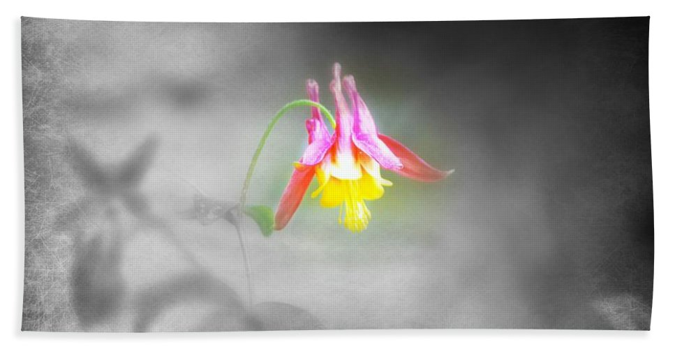 Beach Towel featuring the photograph Single Columbine by Kim Blaylock