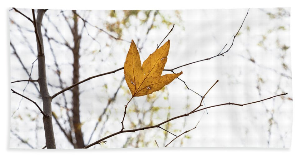 Fall Beach Towel featuring the photograph Single Leaf In Fall by Steve Wile