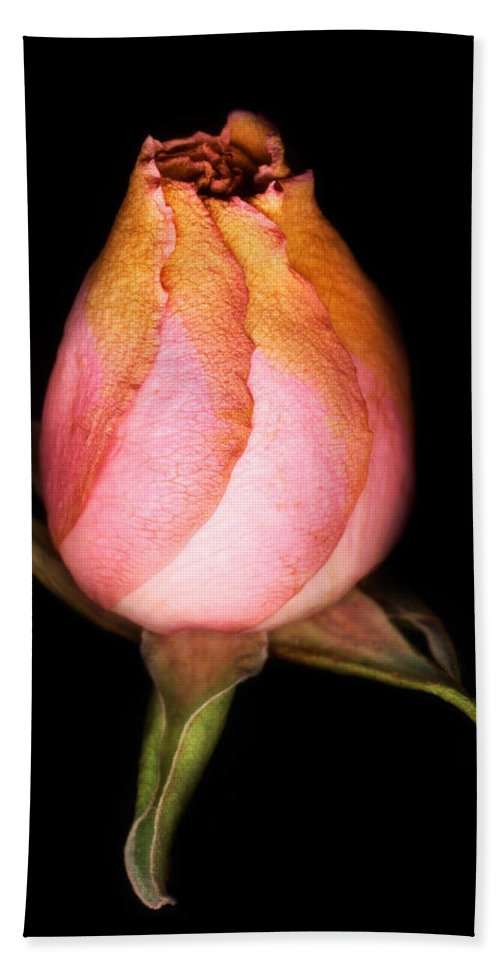 Rose Beach Towel featuring the photograph single Rose by Marilyn Hunt