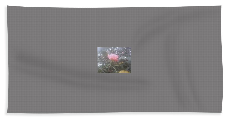 Single Pink Rose Beach Towel featuring the photograph Single Rose by R Chambers