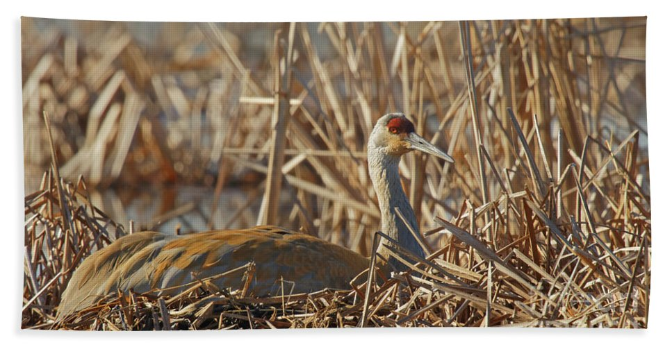 Sandhill Crane Beach Towel featuring the photograph Sitting On The Nest by Natural Focal Point Photography