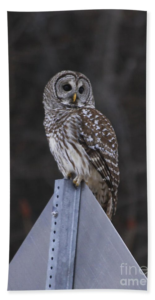 Bird Beach Towel featuring the photograph Sitting On The Sign Post by Deborah Benoit