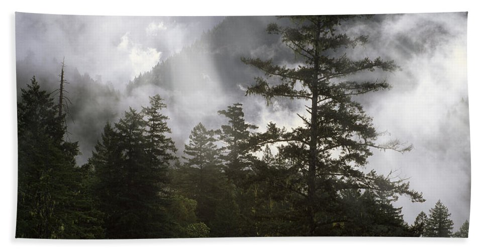 Oregon Beach Towel featuring the photograph Siuslaw National Forest by Leland D Howard
