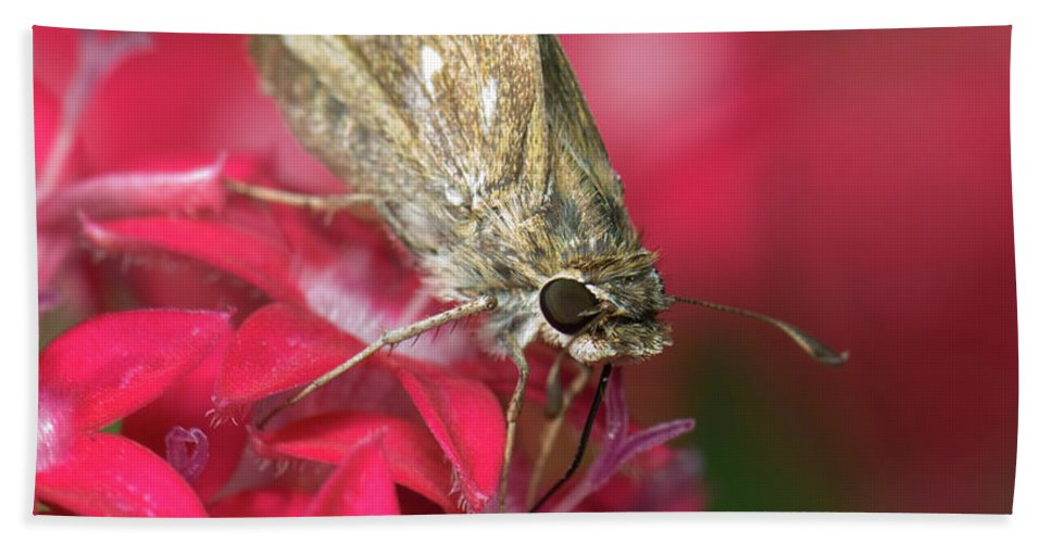 Butterfly Beach Towel featuring the photograph Skipper Butterfly by Betty LaRue