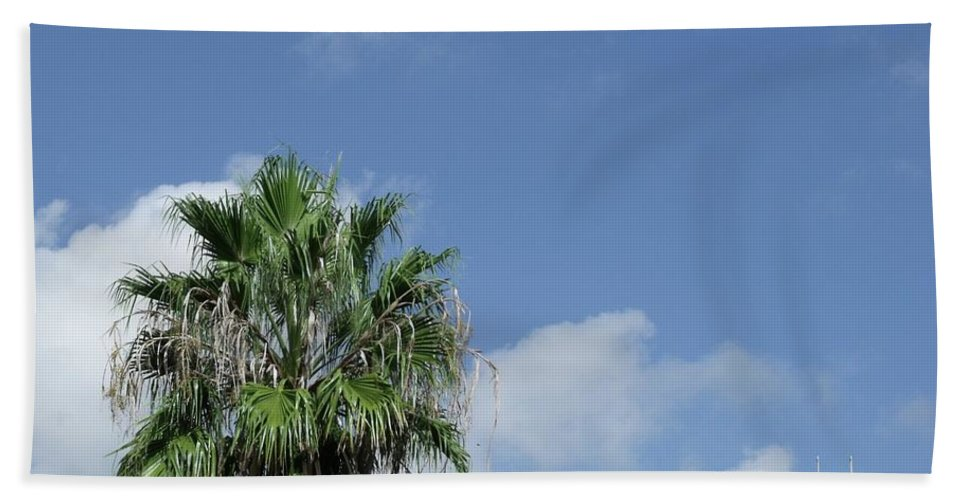 Landscapes Beach Towel featuring the photograph Sky Palm by Steve Cochran