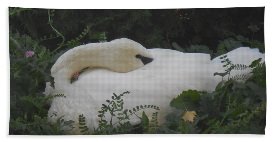 Trumpeter Swan Beach Towel featuring the photograph Sleeping Beauty by LKB Art and Photography