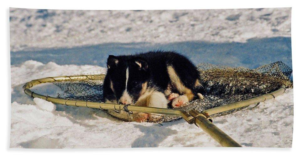 Alaska Beach Towel featuring the photograph Sleeping Puppy by Juergen Weiss