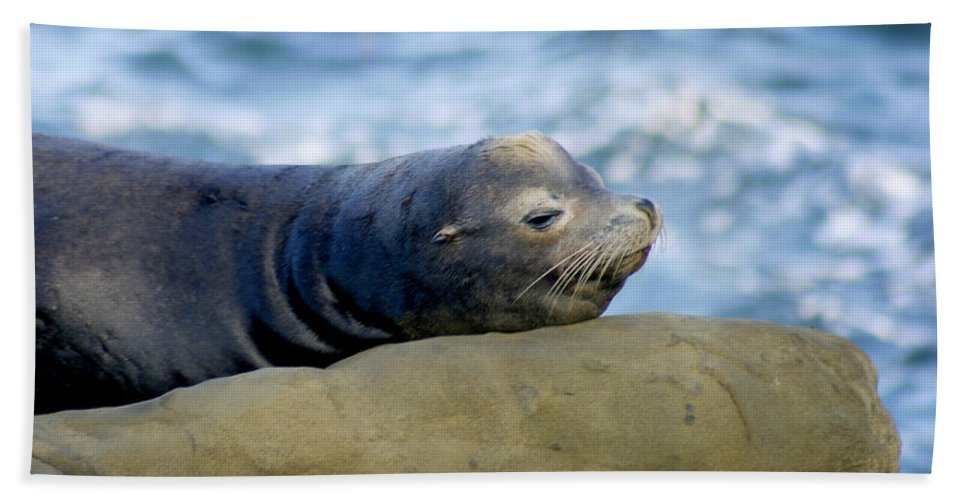 Seal Lion Beach Towel featuring the photograph Sleeping Sea Lion by Anthony Jones