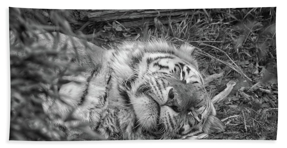 Wild Beach Towel featuring the photograph Sleeping Tiger by Martin Newman