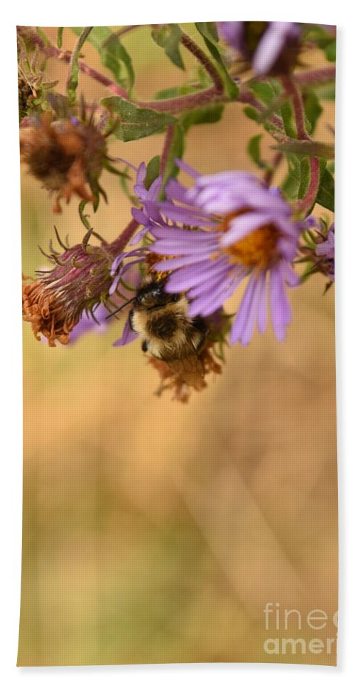 New England Aster Beach Towel featuring the photograph Sleepy Bee On New England Aster Vertical by Rowena Throckmorton