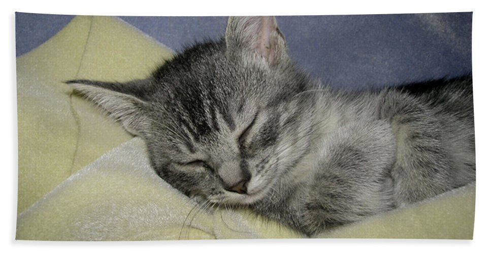Kitten Beach Towel featuring the photograph Sleepy Time by Donna Brown