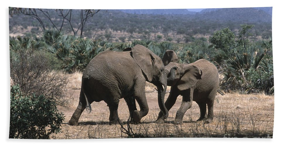 Elephants Beach Towel featuring the photograph Slight Disagreement by Sandra Bronstein