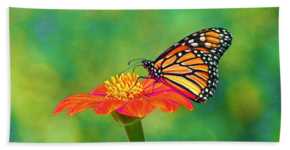 Monarch Beach Towel featuring the photograph Small Wonders by Byron Varvarigos