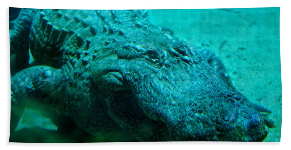Aligator Beach Towel featuring the photograph Smile Pretty Now by Donna Blackhall