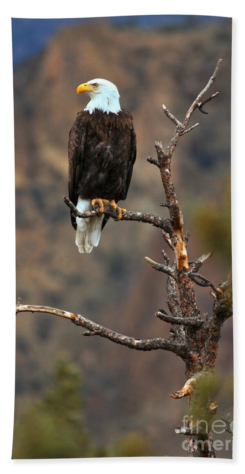 Eagle Beach Towel featuring the photograph Smith Rock Bald Eagle by Adam Jewell