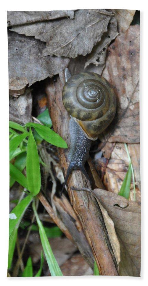 Snail Beach Towel featuring the photograph Snail by Rich Bodane