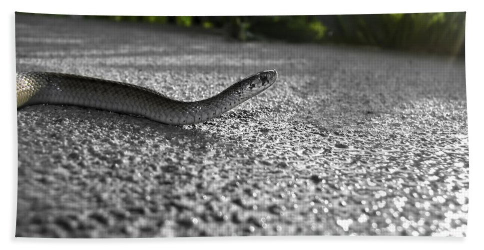 Snake Beach Towel featuring the photograph Snake In The Sun by Amber Flowers