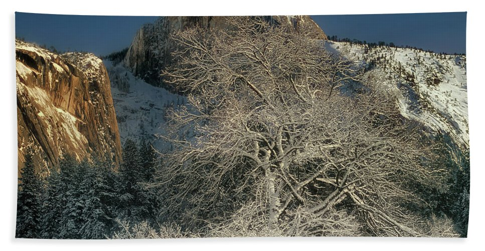 Dave Welling Beach Towel featuring the photograph Snow-covered Black Oak Half Dome Yosemite National Park California by Dave Welling