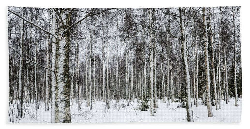 Snow Beach Towel featuring the photograph Snow Covered Trees by Amir Paz