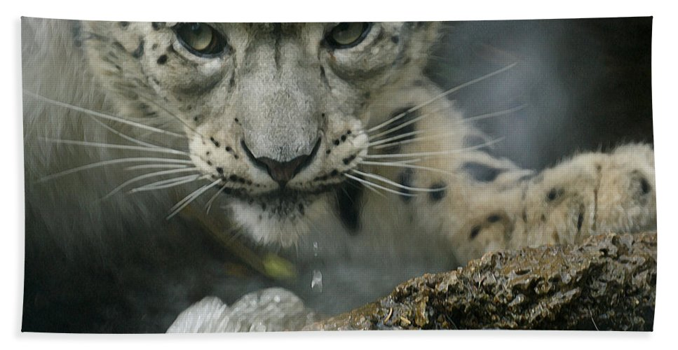 Animals Beach Towel featuring the photograph Snow Leopard 11 by Ernie Echols