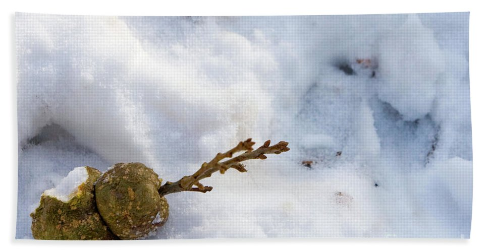 Beautiful Beach Towel featuring the photograph Snow Sprouts by Alan Look