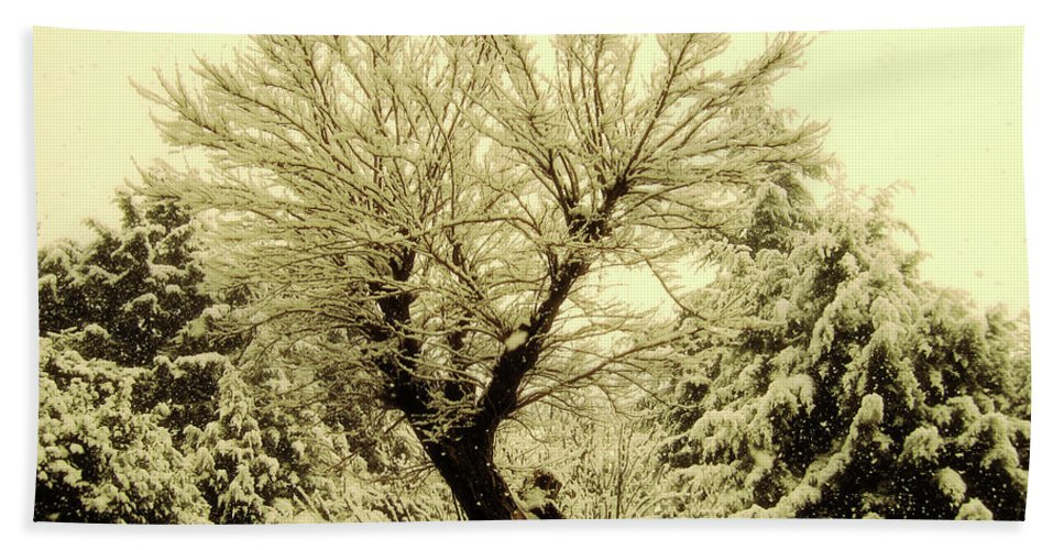 Snowfall Beach Towel featuring the photograph Snowfall by Ilaria Andreucci