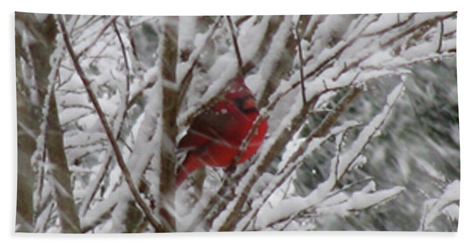 Bird Beach Towel featuring the photograph Snowing by Donna Brown