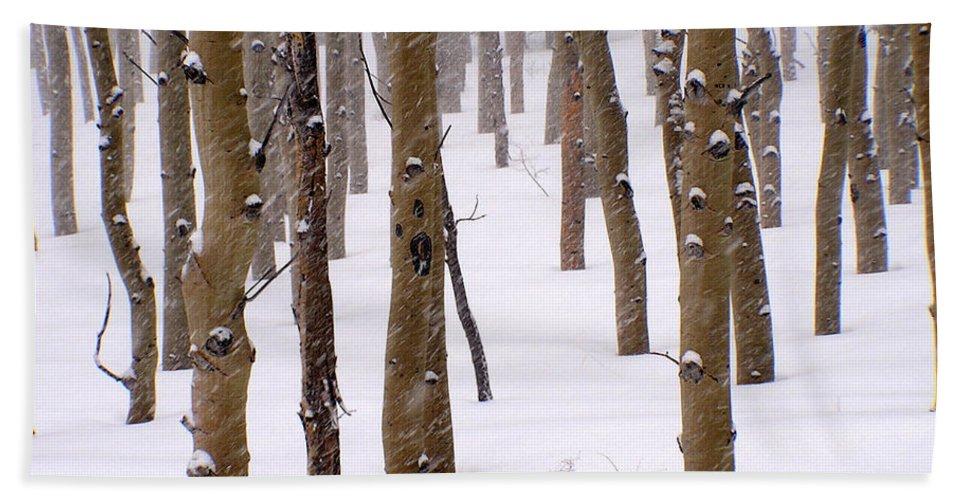 Aspen Beach Towel featuring the photograph Snowy Aspen by Carol Milisen