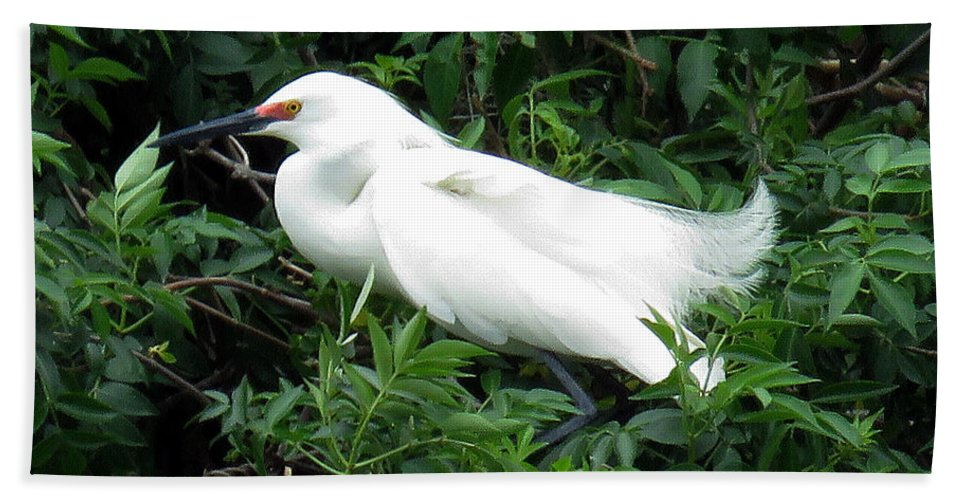 Rose Beach Towel featuring the photograph Snowy Egret 12 by J M Farris Photography