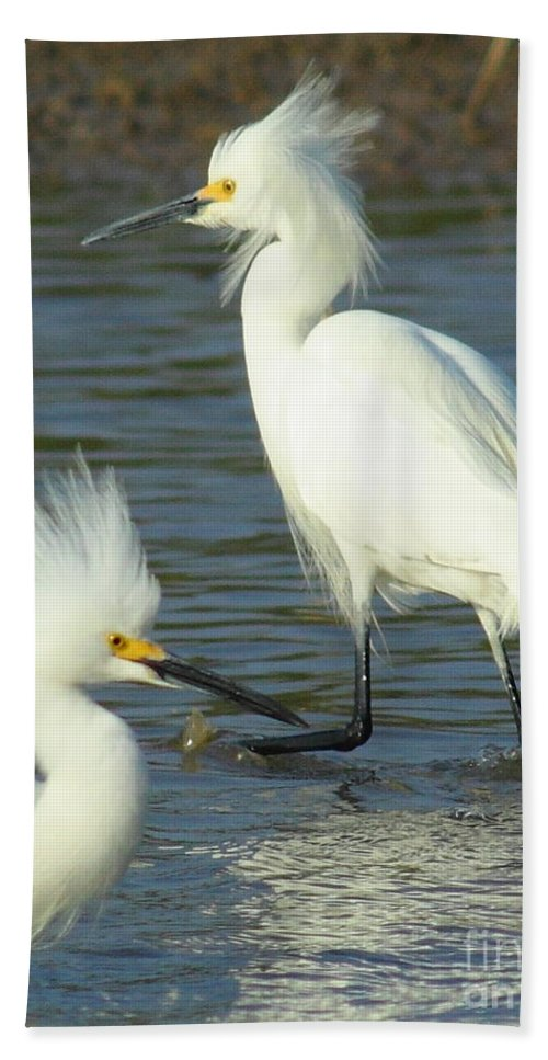 Nature Beach Towel featuring the photograph Snowy Egrets by Robert Frederick