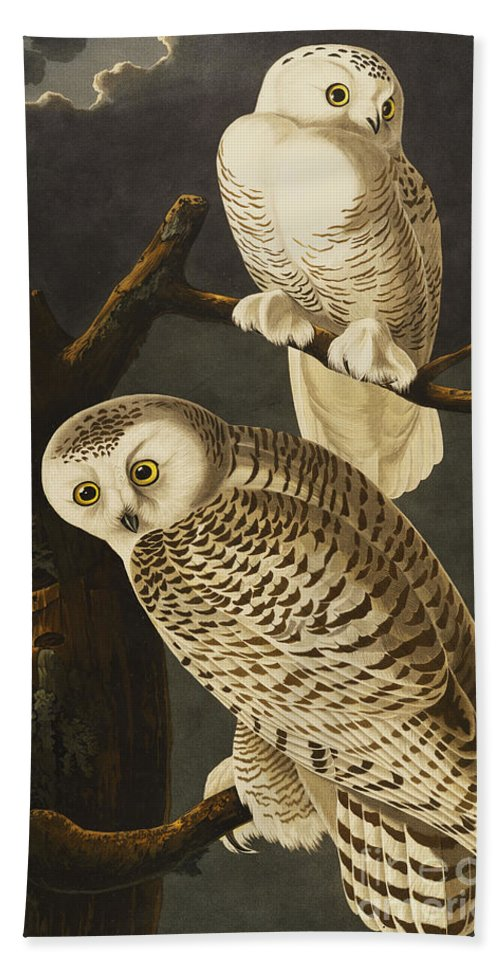 Snowy Owl (nyctea Scandiaca) Plate Cxxi From 'the Birds Of America' (aquatint & Engraving With Hand-colouring) By John James Audubon (1785-1851) Beach Towel featuring the drawing Snowy Owl by John James Audubon