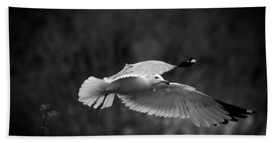 Sea Gull Beach Towel featuring the photograph Soaring Seagull by Keith Allen
