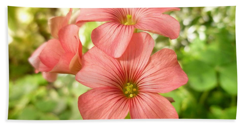 Flower Beach Towel featuring the photograph Soft And Peachy Smiles by Lingfai Leung