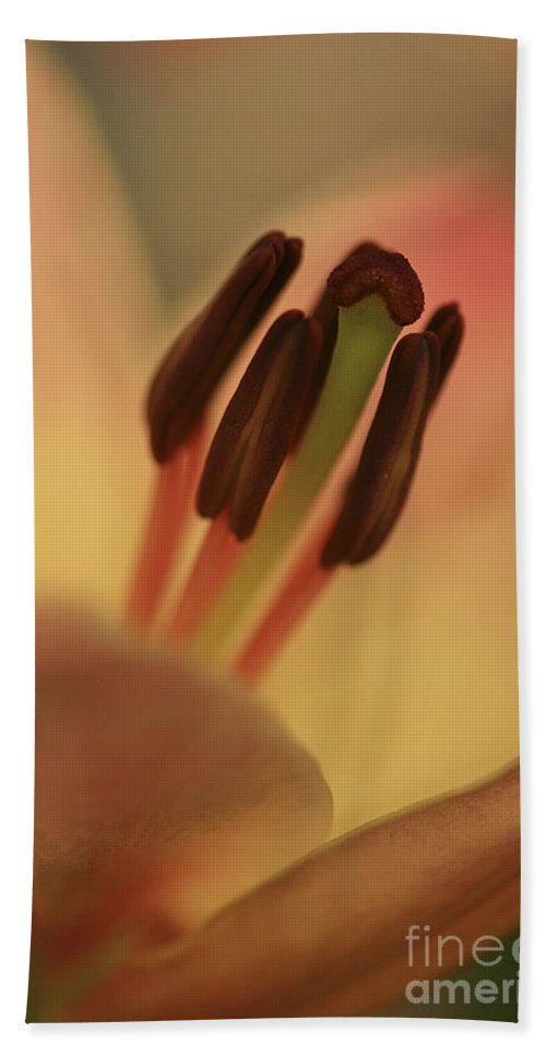 Flower Beach Towel featuring the photograph Soft And Pure by Deborah Benoit