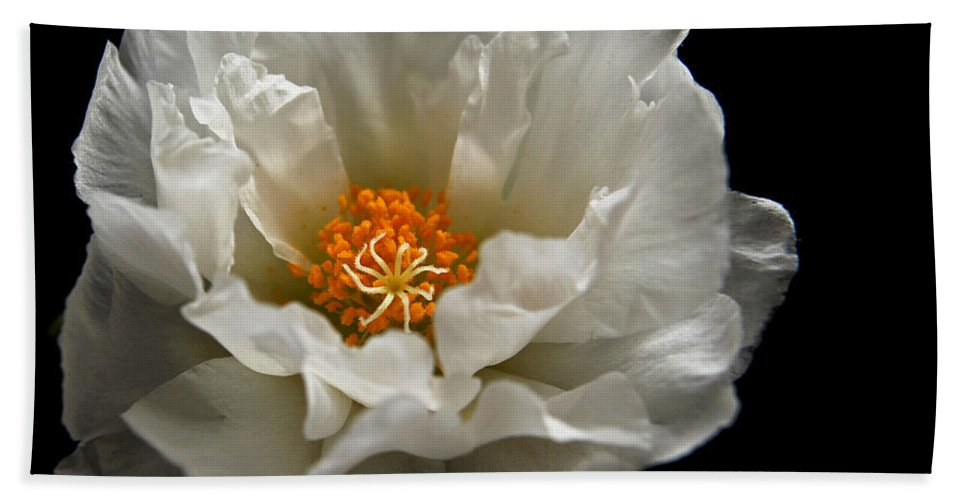 Moss-rose Beach Towel featuring the photograph Soft And Pure by Judy Vincent
